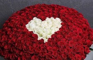 букет із 100 троянд